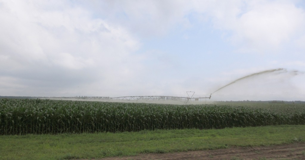 A center pivot manure irrigation system is used to spread manure on a Wisconsin corn field. Courtesy of Wisconsin Department of Natural Resources