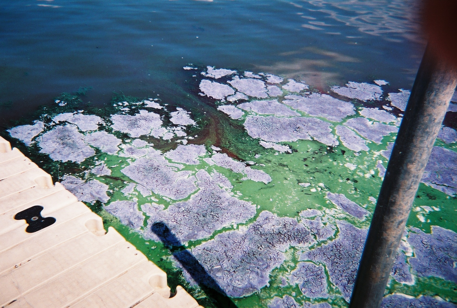 Algae blooms on Lake Kegonsa in 2010.