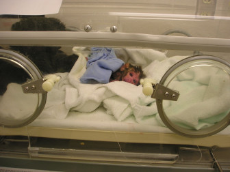 A photo of r04040 on April 26, 2004, the day he was born.