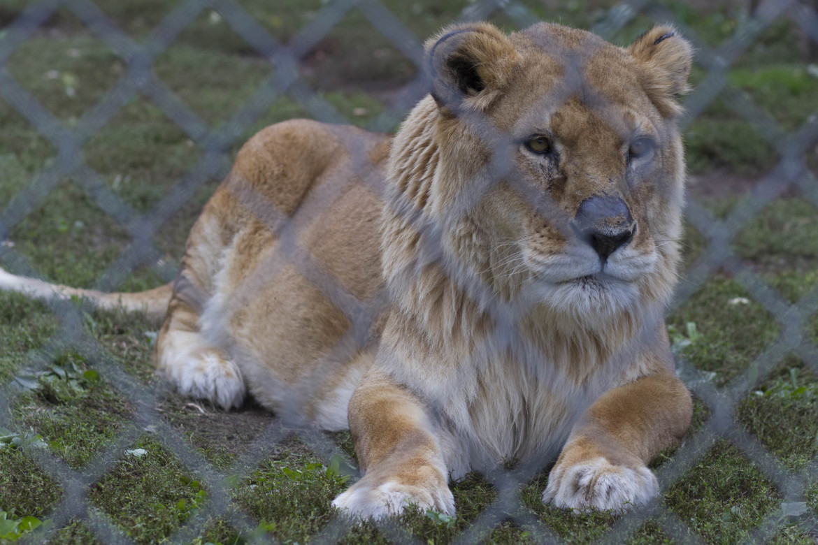 Limits to exotic pets in Wisconsin loom, but critics cite
