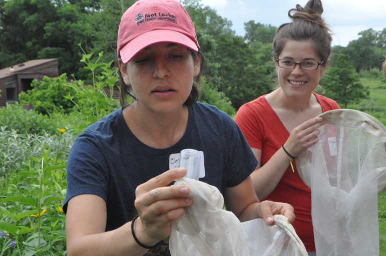 University of Wisconsin-Madison postdoctoral researcher Christina Locke identifies bees during the 2015 Bee Fest in June at the UW-Madison Arboretum. Locke helped the state of Wisconsin draw up a plan to protect pollinators, including bees.