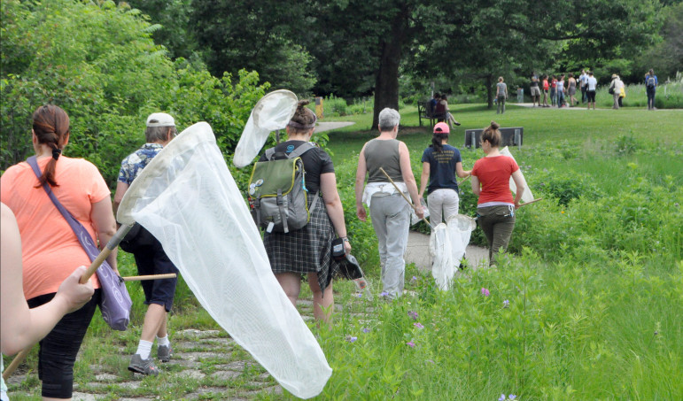 Attendees at the 2015 Bee Fest at the University of Wisconsin-Madison Arboretum set out to catch and identify bees. Wisconsin has among the highest annual loss rate of managed honeybees in the country.